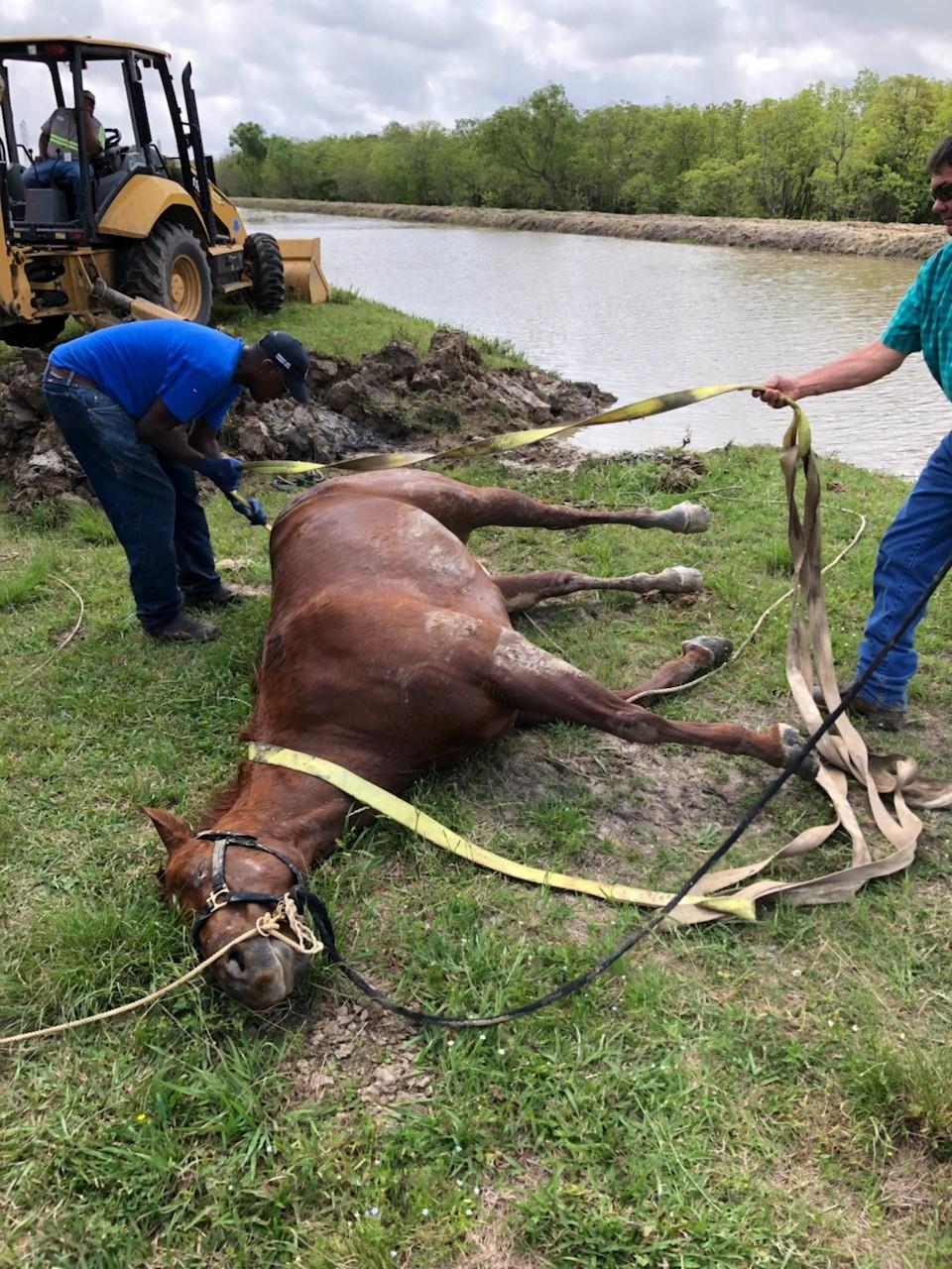 Press Releases - Horse Rescue in Port Arthur - Sheriff's